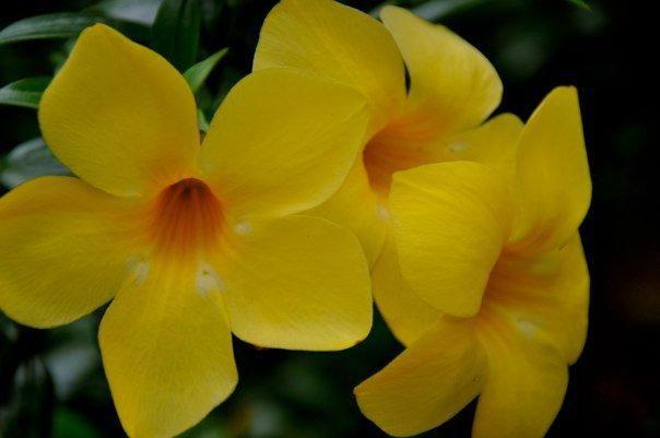 Pin On Tamilnadu India Flowers