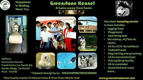 Greenstone Kennel Presents One And Only Kennel In Pune For