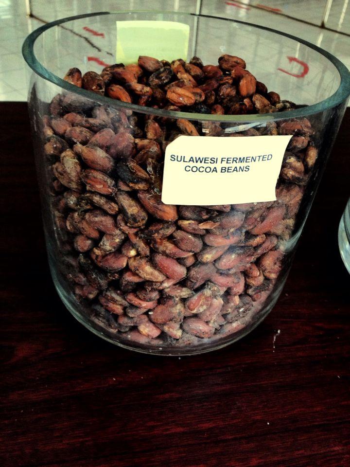 Cocoa sulawesi, cokelat, chocolate, celebes, indonesia