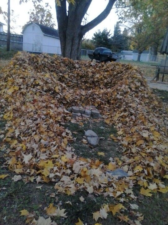 Leaf fort!! I used to make leaf forts and houses all the time with the guys up the hill. Oh, how I miss the days of leaf/snow forts, climbing trees, pilfering vegetables from Judy's garden, catching toads... <3