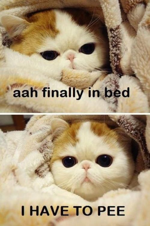 finally in bed  Oh, so true.