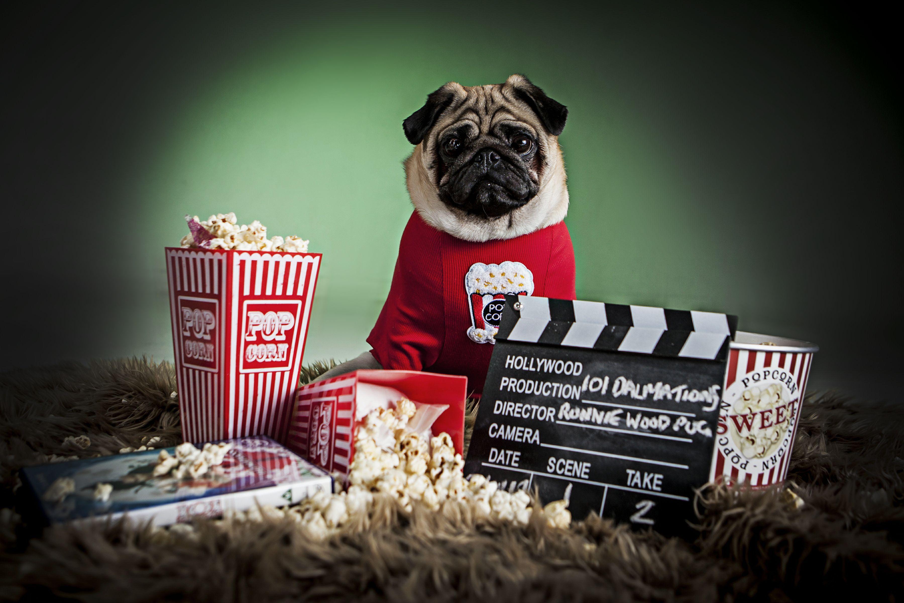 Pug Portrait Popcorn And Movie Dog Portraits Studio Dog