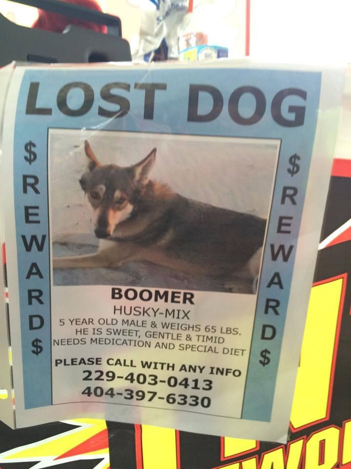 Everyone This Is An Added Picture With More Info On Boomer He Was