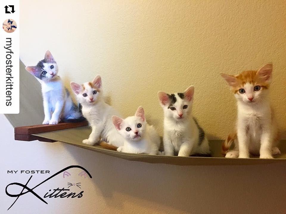 Customer photo gallery catsplay superstore cats cat