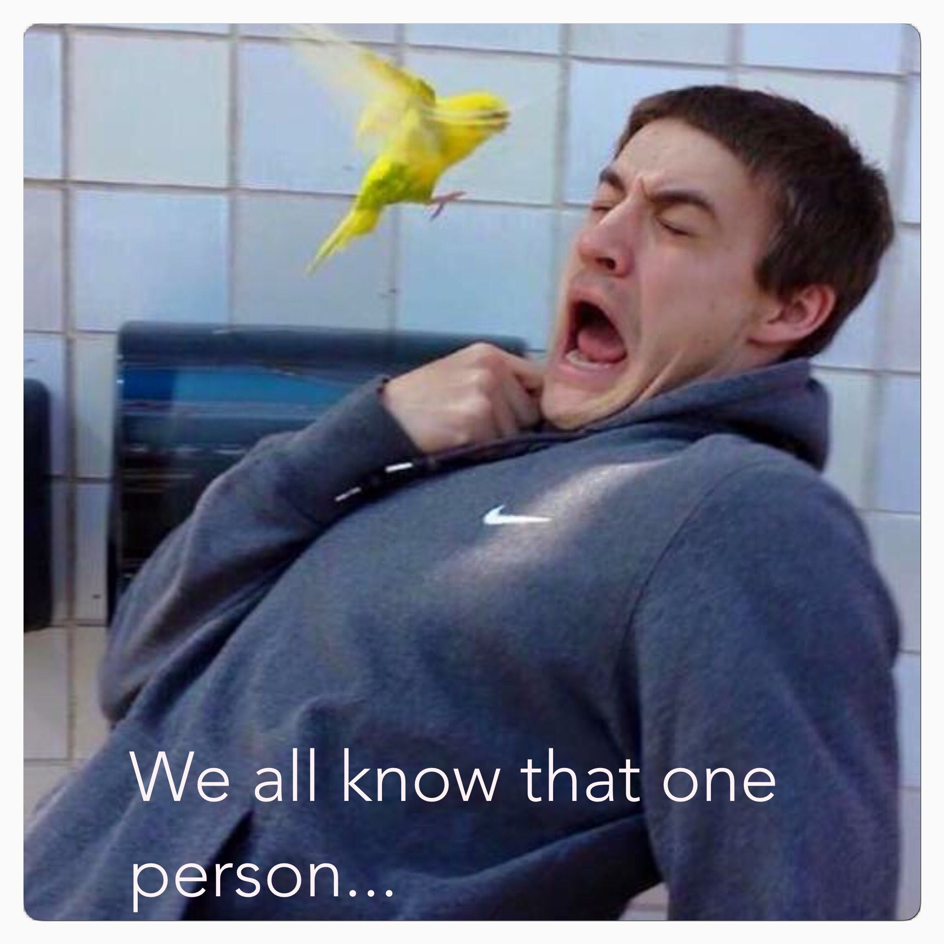 We All Know That One Person Scared Of Birds Hahaha Funny Relatable Memes Bird Meme That One Person