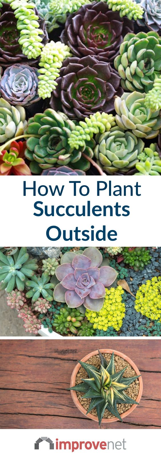 How To Plant Succulents Outside Landscaping Succulent