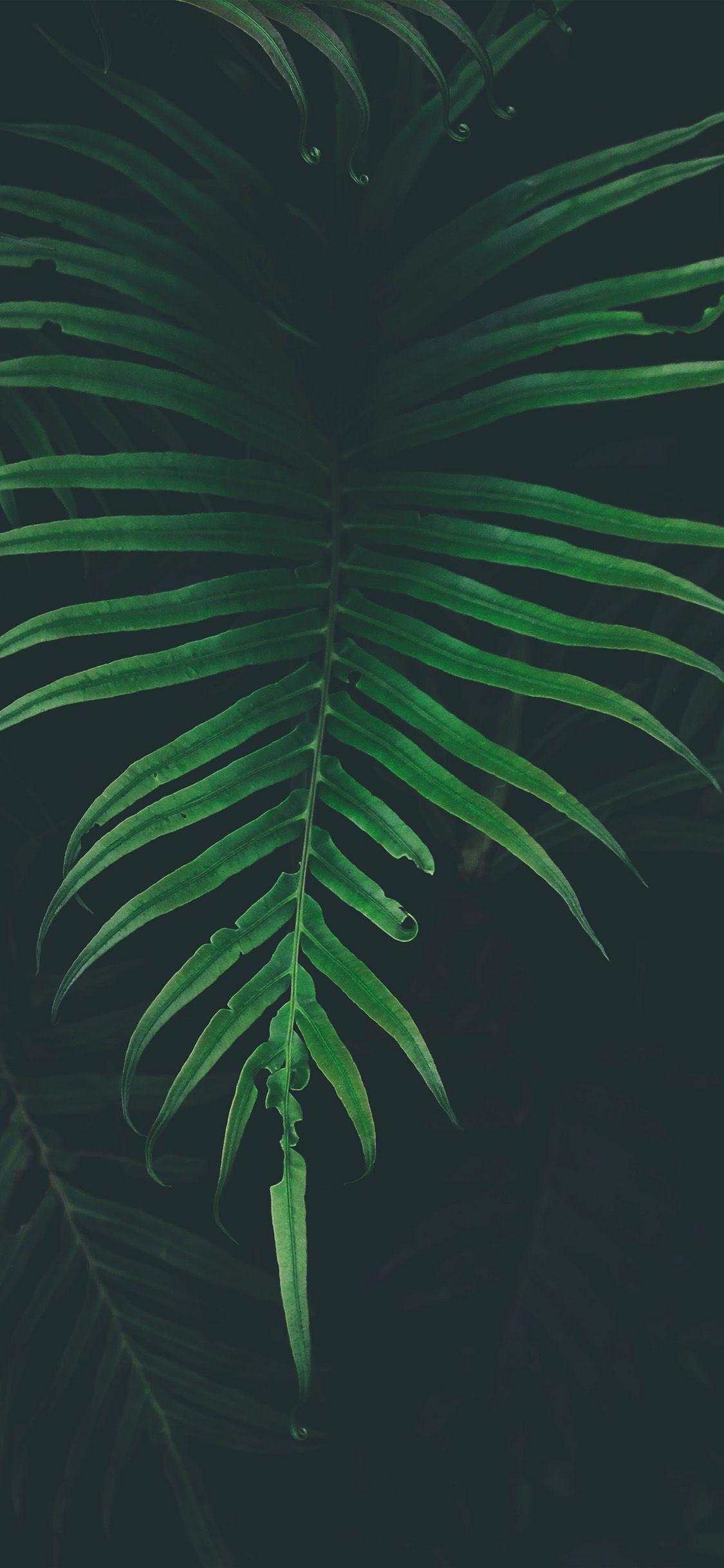 nw44 leaf tree dark nature via Wallpapers