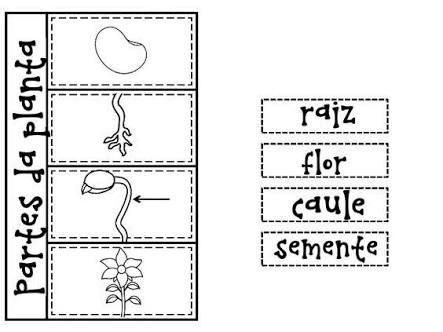Resultado de imagem para atividades de caderno interativo
