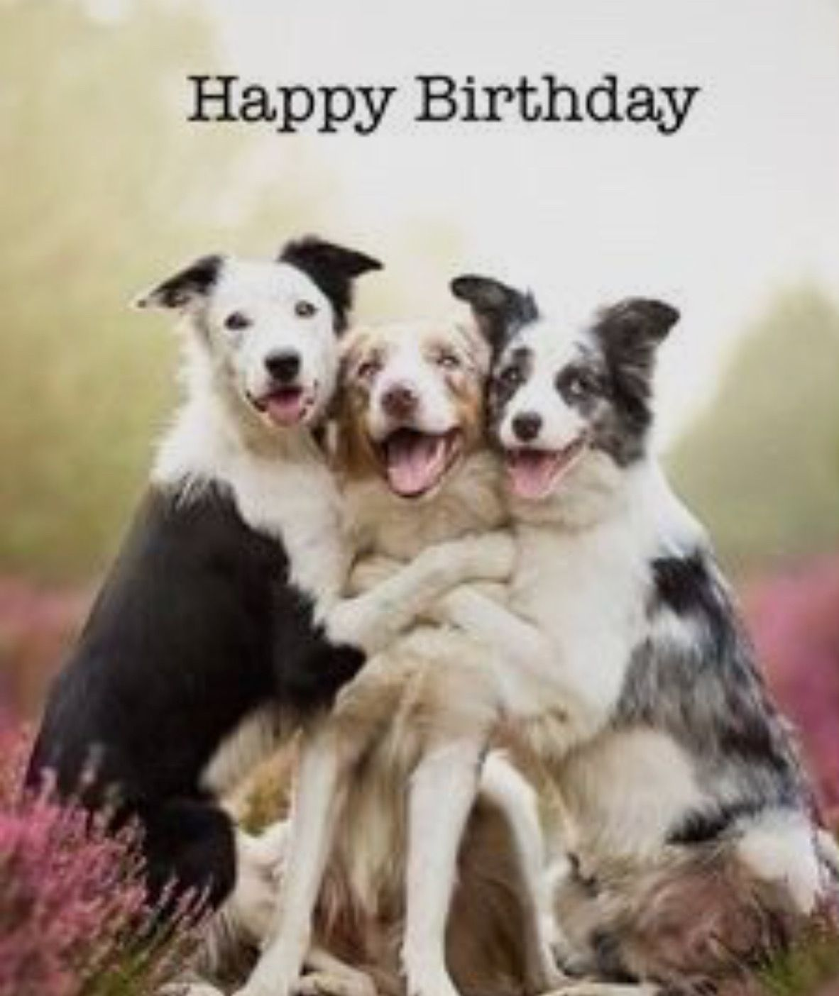 Geburtstagswunsche Vom Hund Karten Zazzle At