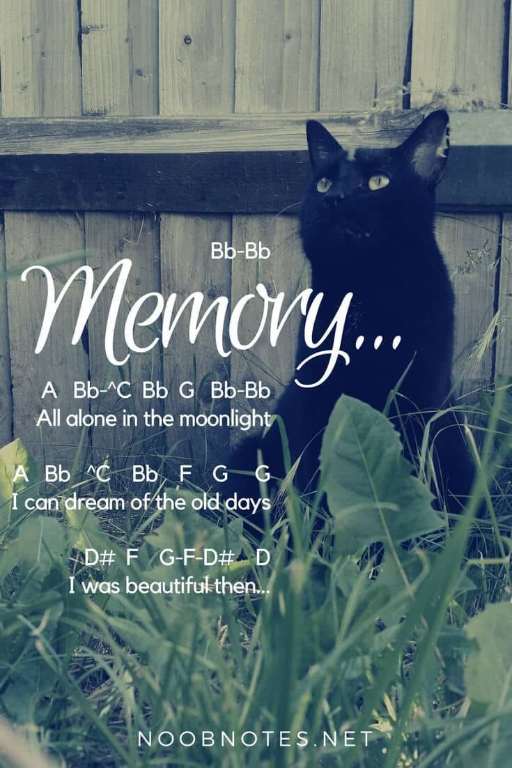 Memory, From Cats. (Fingerstyle Guitar Cover With Lyrics