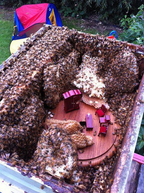 Bees Build Down | Bee keeping, Backyard beekeeping
