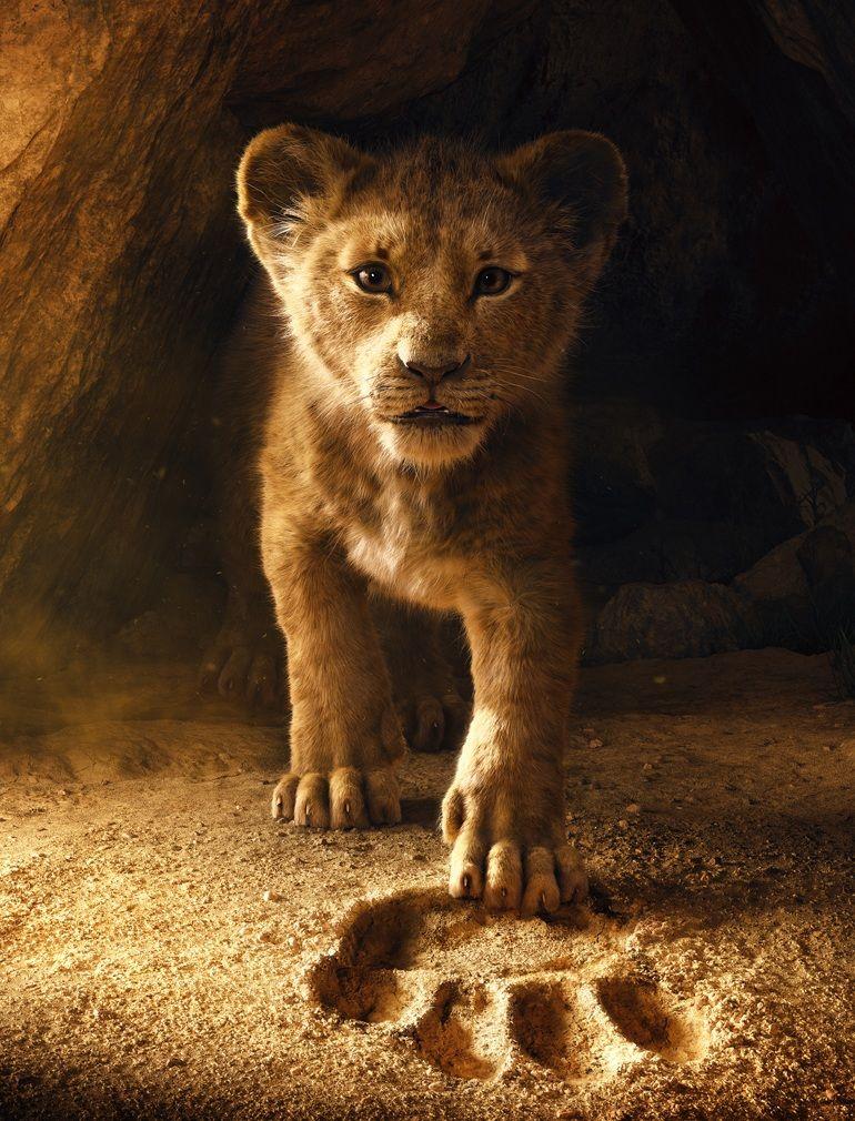 Google Image Result For Https Duma Bg Images 2018 11 1909 Jpg In 2020 Lion King Lion King Art Lion