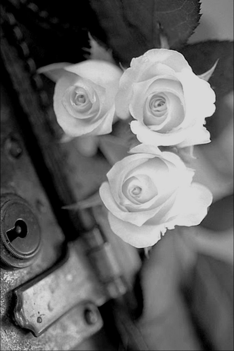 Nughty Nurse Beautiful Rosesflowers Pinterest Flowers