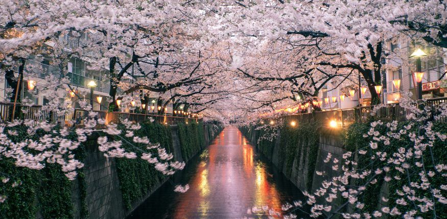 Dc S Cherry Blossoms In 2019 A 10 Minute Walk South Will Bring You To The Welcome Ar Japan Cherry Blossom Festival Cherry Blossom Festival Cherry Blossom Japan