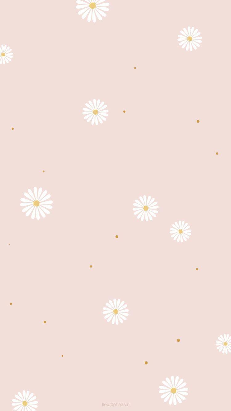 Pin On Wallpapers Wallpaper Bunga Aster Wallpaper Cantik Iphone Wallpaper Sederhana
