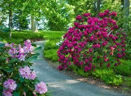 longwood garden rhododendron에 대한 이미지 검색결과