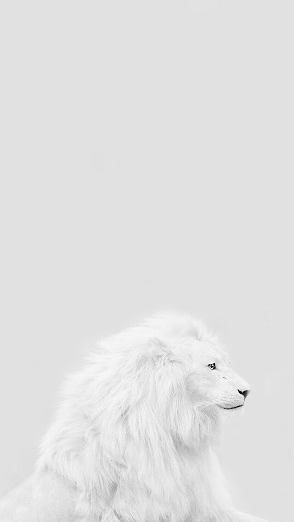 Pin By Anu On Abhay In 2020 White Lion Lion Background White Background Wallpaper