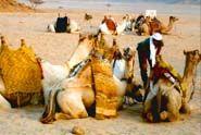 Sharm El Sheikh: relax, divertimento, escursioni ed immersioni... tutto per tutti!