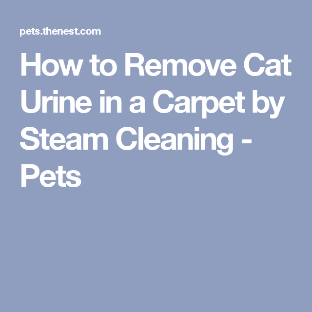 How To Remove Cat Urine In A Carpet By Steam Cleaning