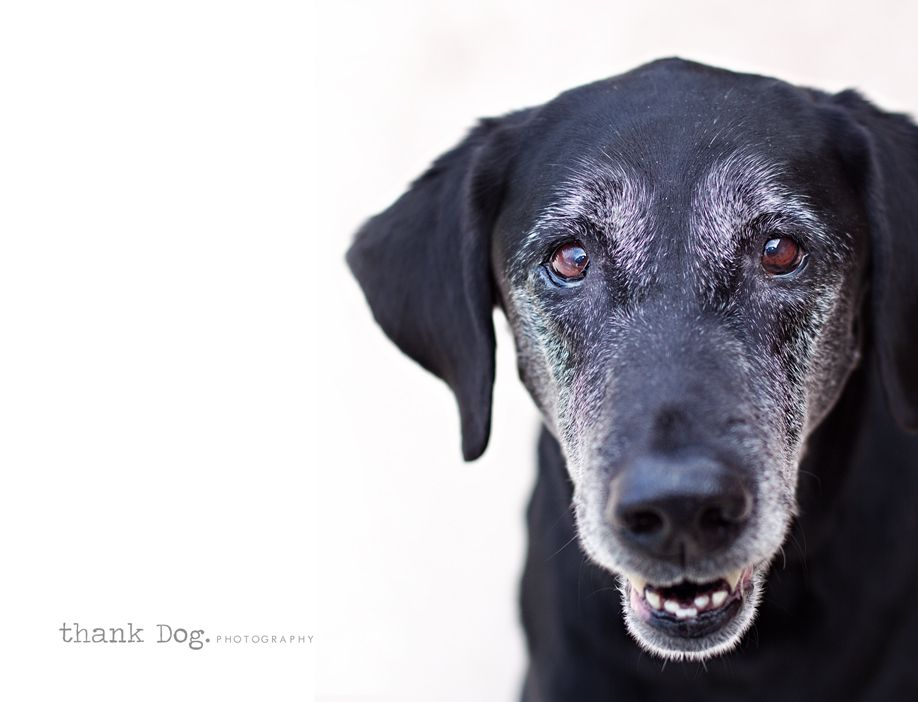 This Looks Like Belley Modern Pet Old Dogs Pet Portraits