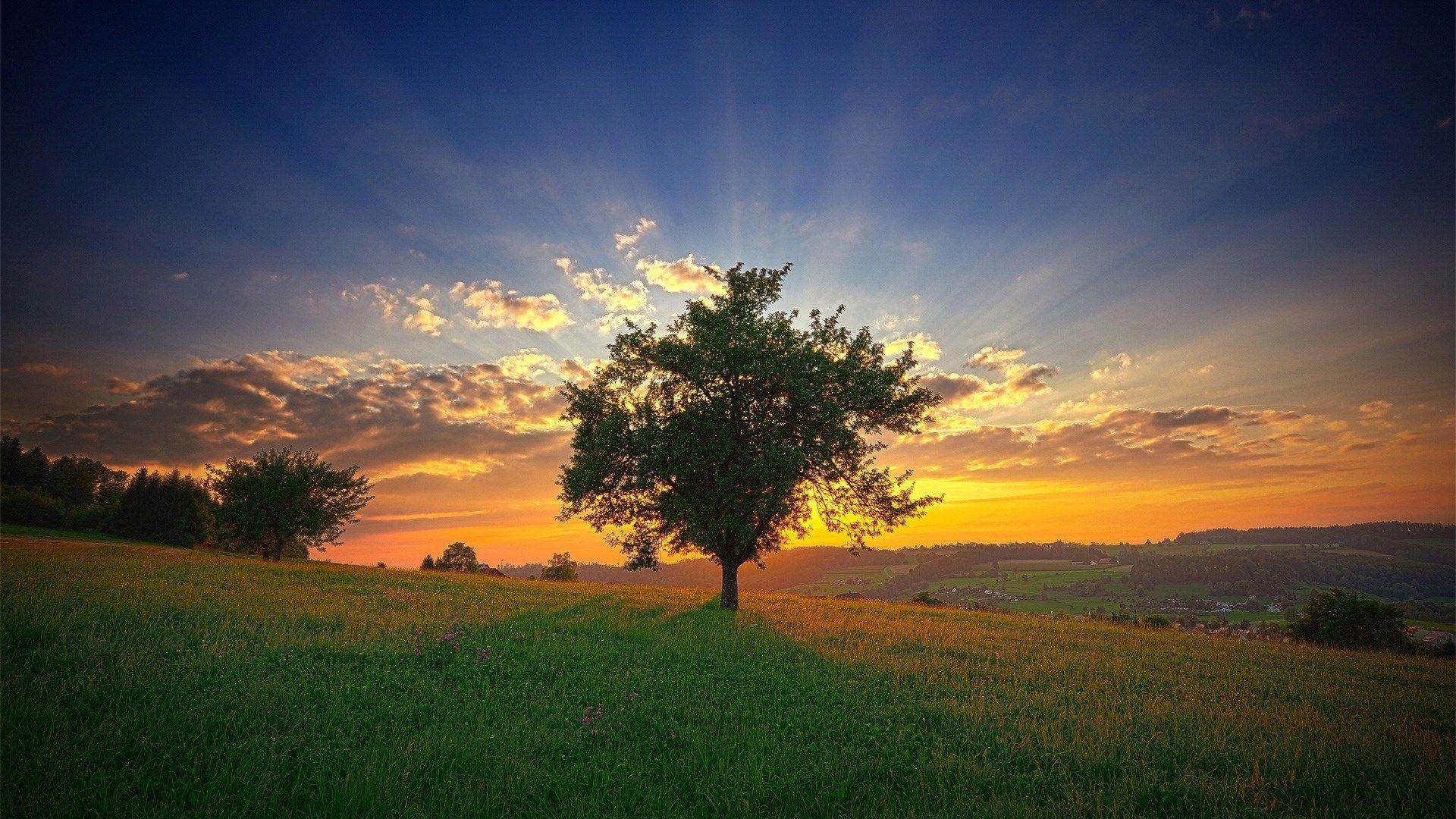 1920x1080 widescreen hd tree Sunset wallpaper, Landscape
