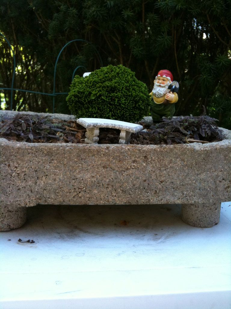 Hypertufa container with miniature cypress, brass button plants, bench and gnome.