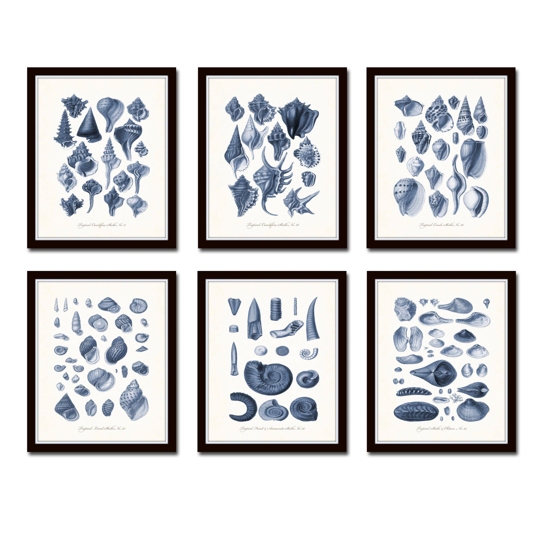Antique blue seashell print set shell prints art print