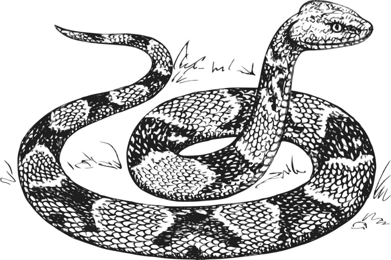 Free Images Com Free Public Domain Images Disegni Di Tatuaggio Serpente Disegni