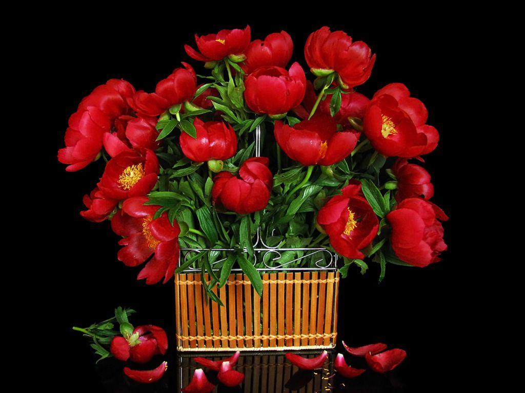 Free flower bouquet wallpaper download the 1024x768px fond noir free flower bouquet wallpaper download the 1024x768px fond noir pinterest flower bouquets and flowers izmirmasajfo