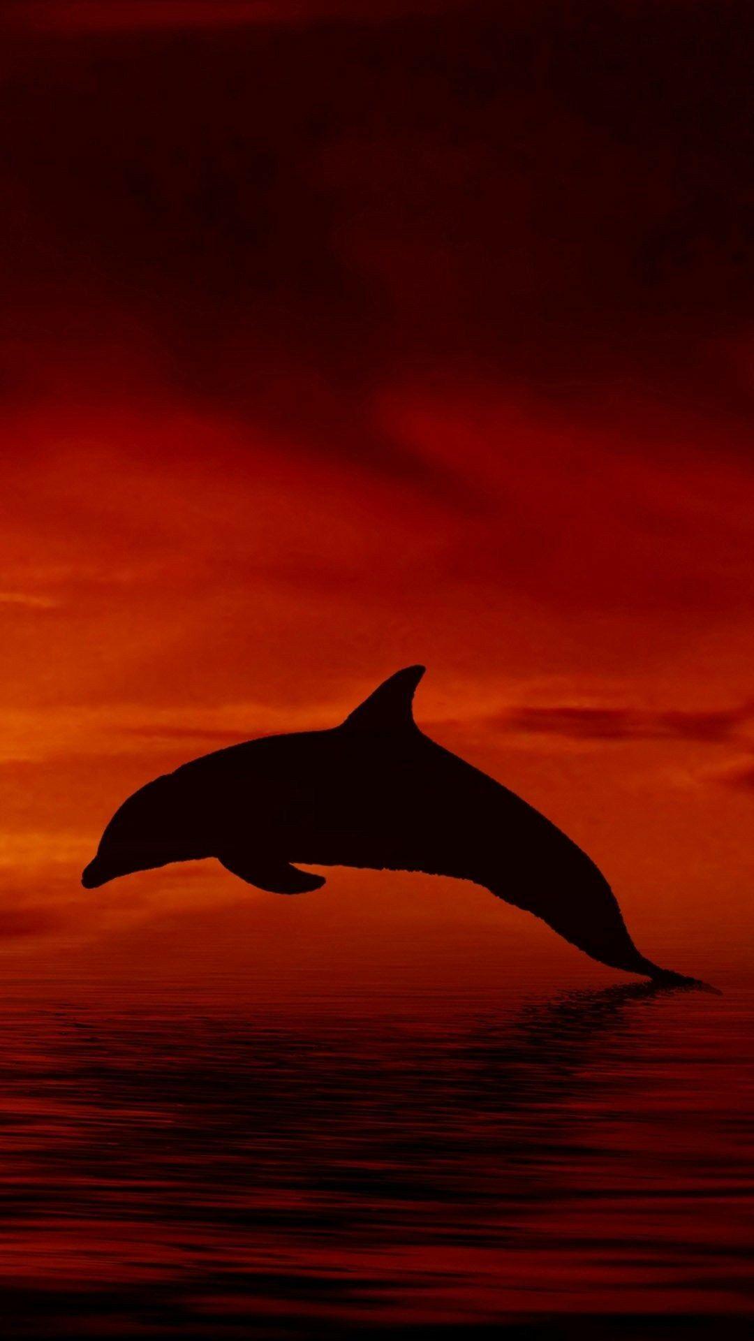 Dolphin wallpaper Wallpaper, Hd wallpaper, Amazing hd