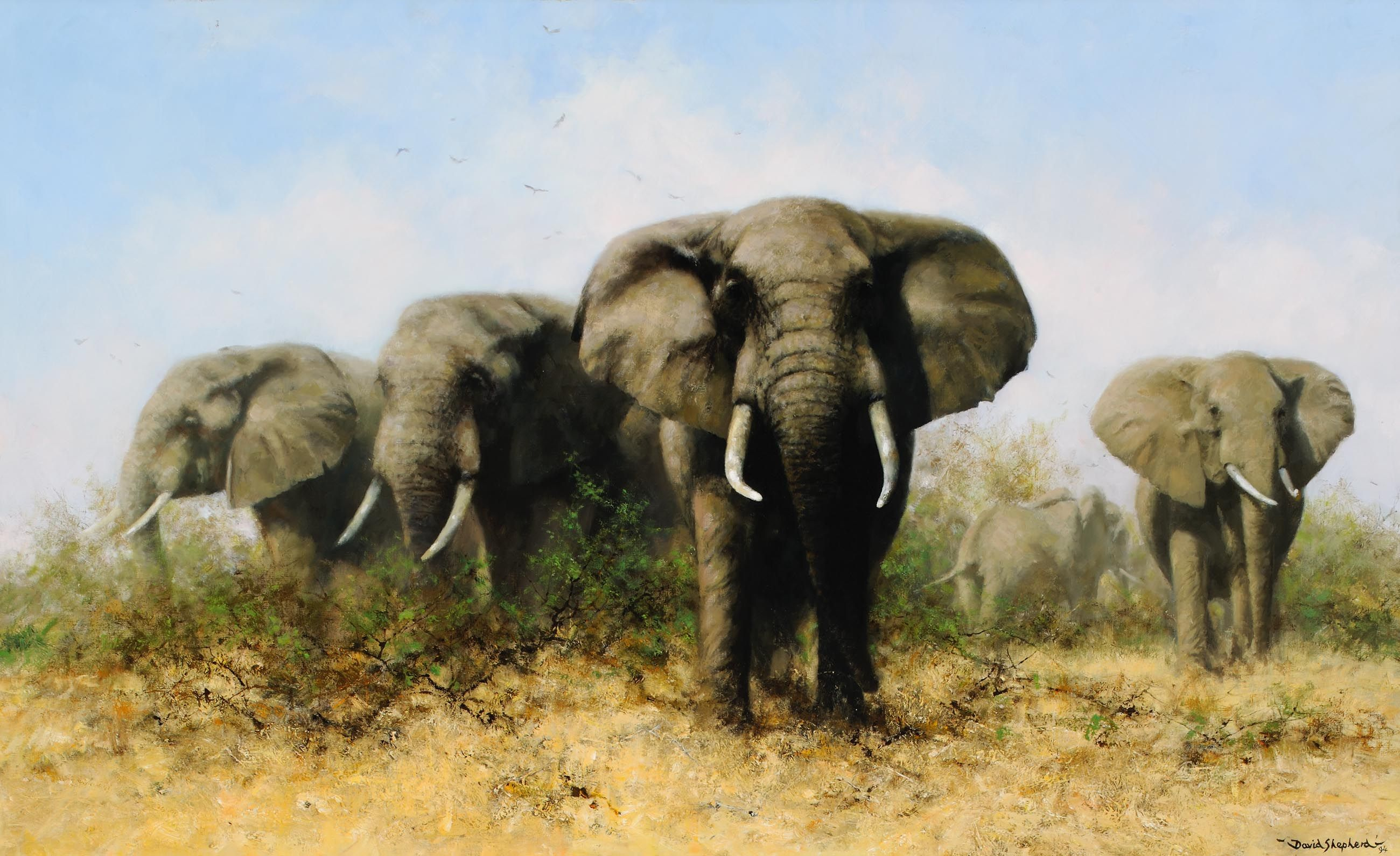 a4f3ce11e Shepherd David Elephant Charge 1271