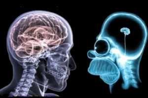SUEÑO REM La mayor proporción de sueño REM ocurre en la fase más activa del desarrollo cerebral, por lo tanto se podría pensar que en este proceso interviene el sueño REM.
