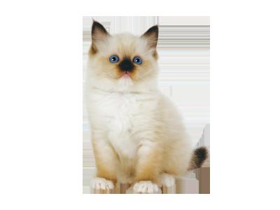 ペットの専門店コジマ 子猫 ペット ペットショップ