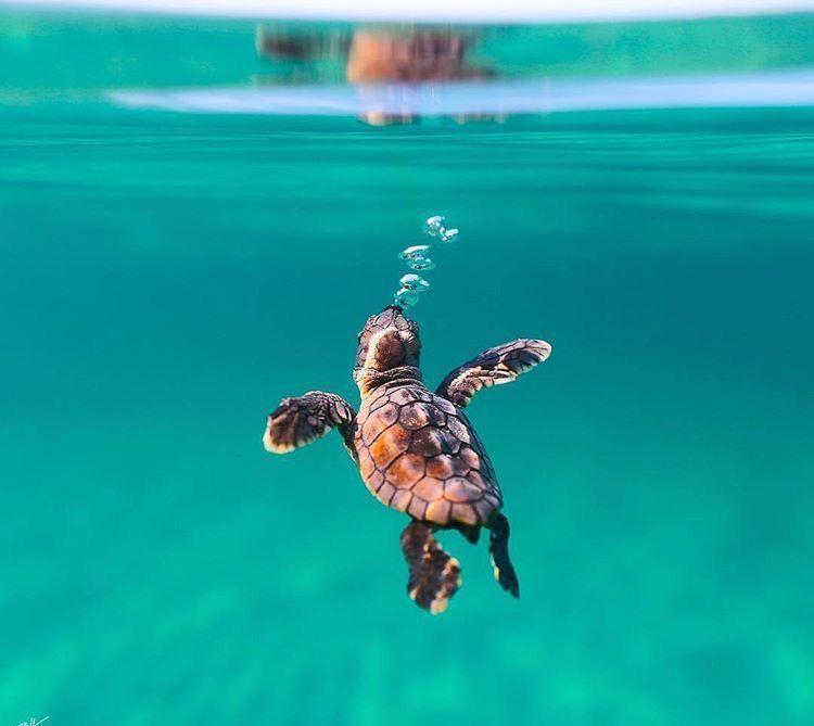 cute baby turtle Cute animals, Cute turtles, Baby turtles