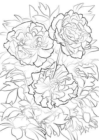 Moutan o Árbol de Peonía Dibujo para colorear   Flores   Pinterest ...