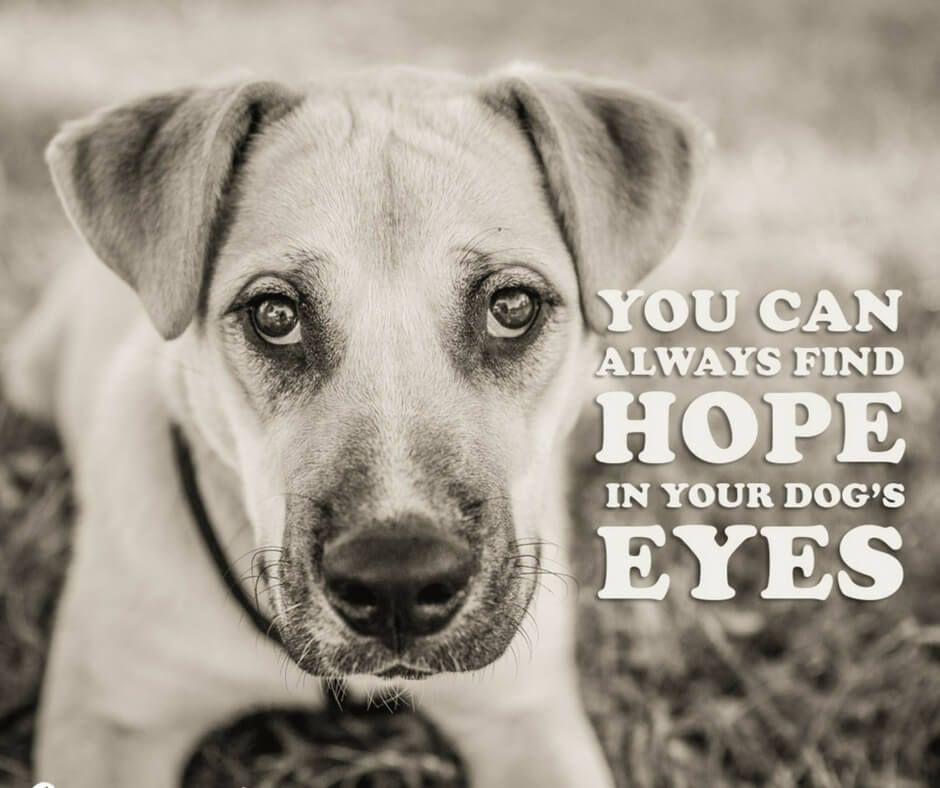 Inspirational Pet Quotes: 21 Inspirational Quotes Every Dog Lover Should Read