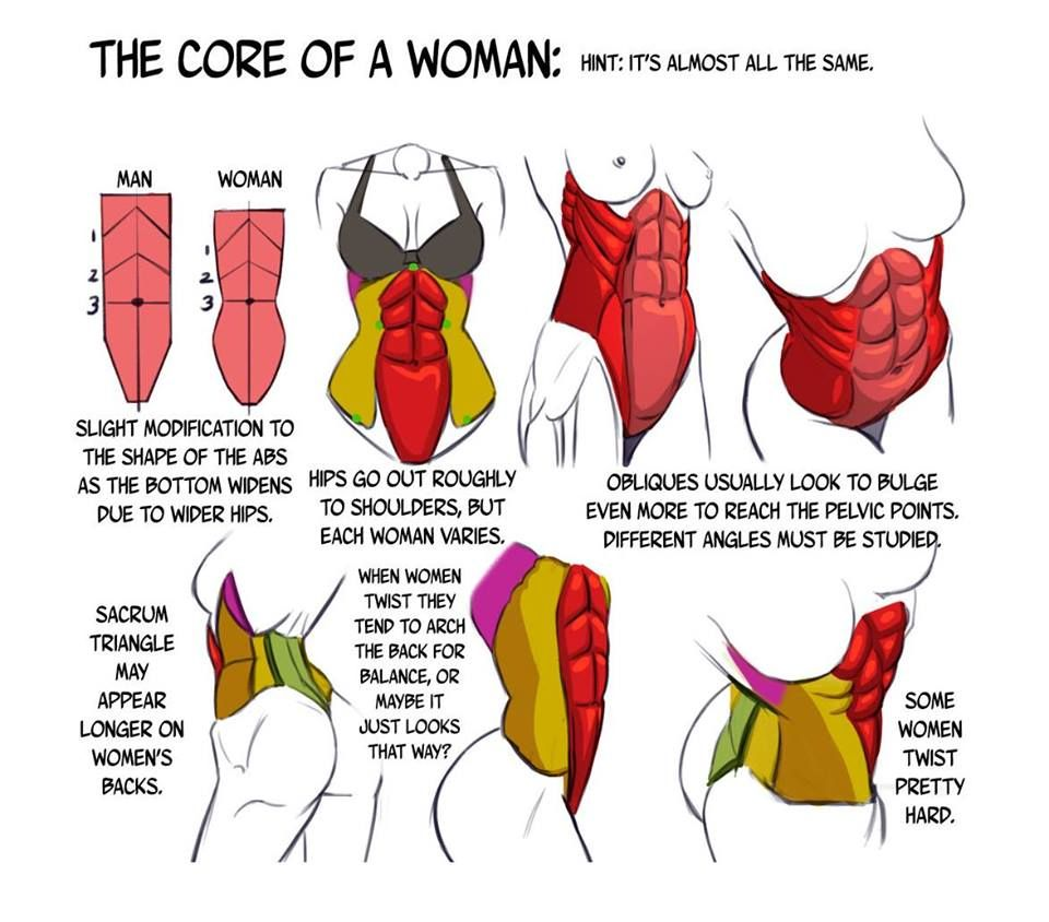 Male & Female abs | anatomy | Pinterest | Female abs and Anatomy