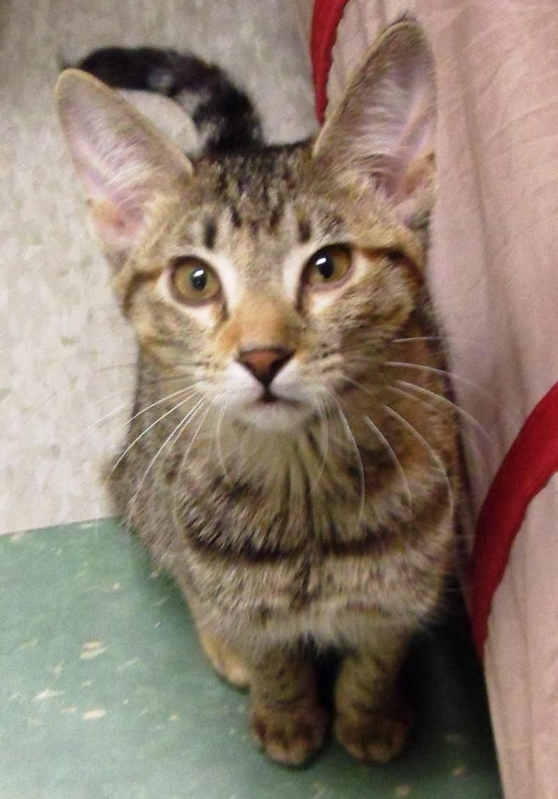 Adopt Seline on Cat love, Short hair cats, Cats
