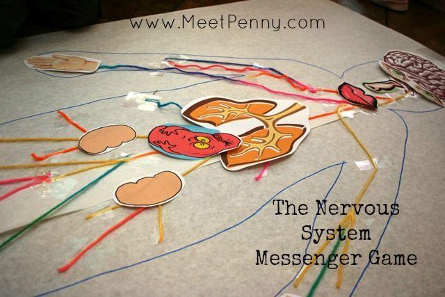 Nervous System: Games (Science Trek: Idaho Public Television)