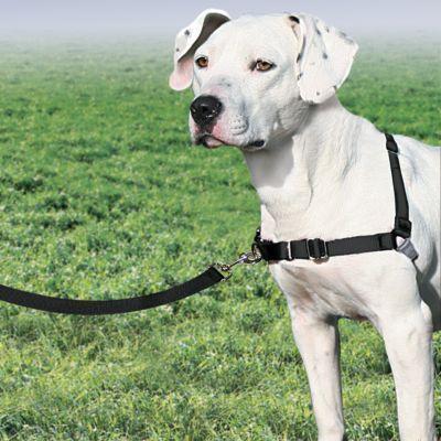 Premier Easy Walk Dog Harness Dog Harness Dogs Dog Minding