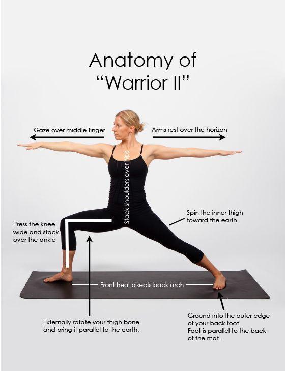 Anatomy Of Warrior Ii Fitness Pinterest Anatomy Yoga And