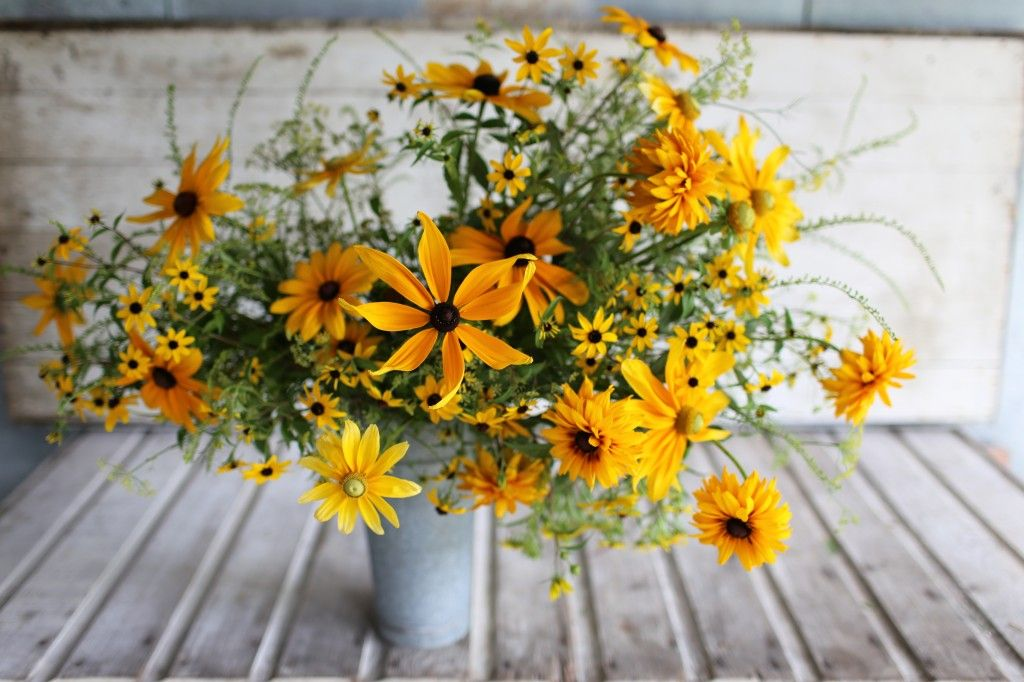 The Seasonal Flower Alliance { August 14 } - Floret Flowers | August flowers,  Seasonal flowers, Fall garden planting
