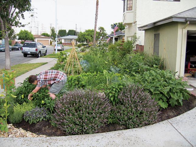 Edible Garden in Lakewood, CA | Lakewood Life | Pinterest | Edible ...