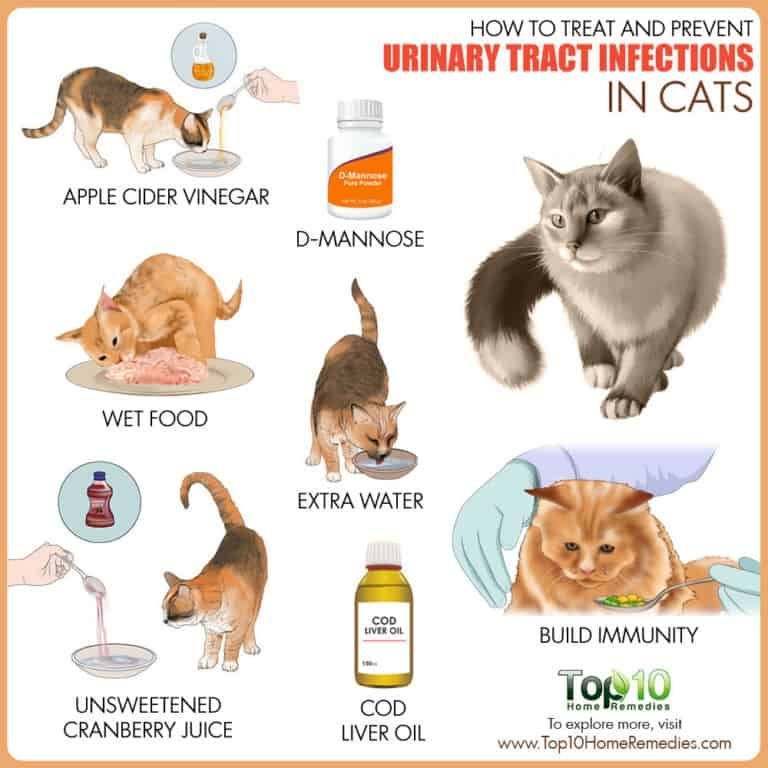 How To Treat And Prevent Urinary Tract Infections In Cats Top 10 Home Remedies Cat Care Cat Uti Cat Remedies