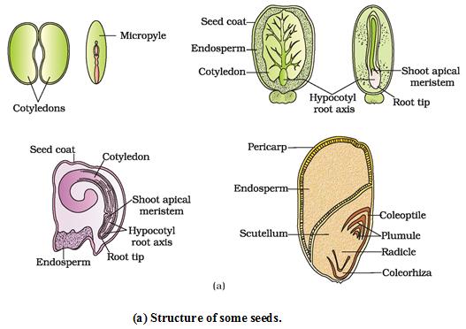 Pin on Fruit & seeds