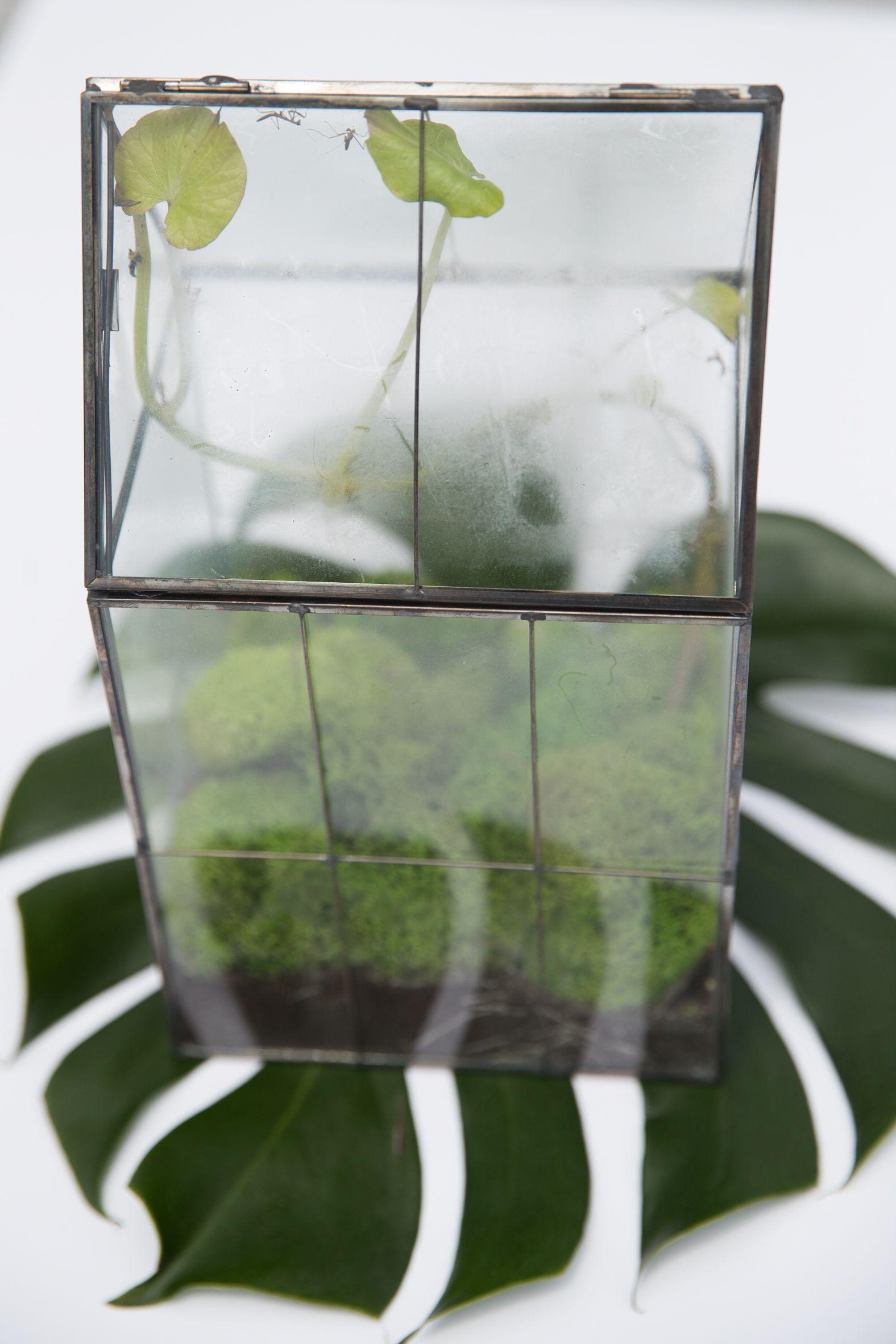 A Modern Take On A Praying Mantis Enclosure Phil Torres Praying Mantis Modern Terrarium Orchid Mantis