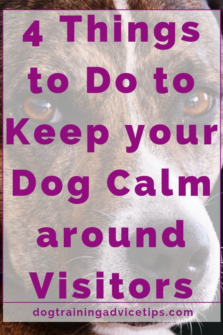 4 things to do to keep your dog calm around visitors dog