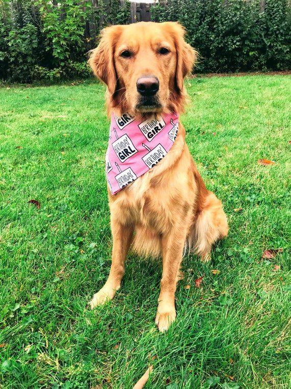 Birthday Girl Dog Bandana Pet Accessory Scarf Ready To Ship 100 Cotton