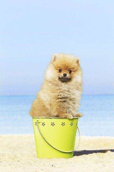 Pin On Dachshund Dog
