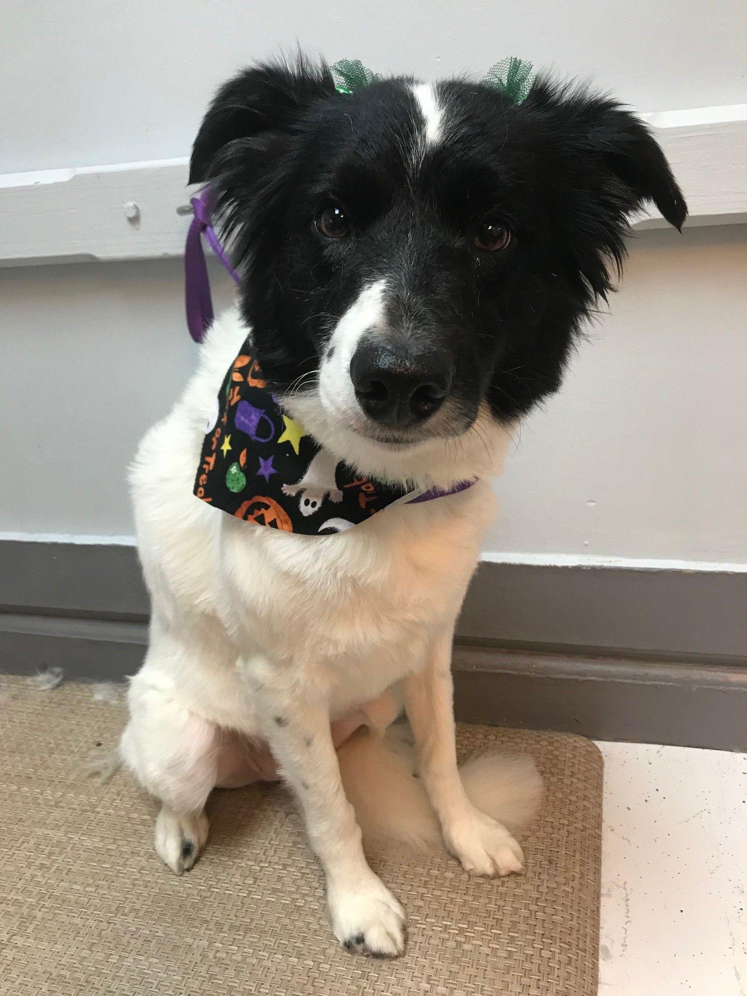 Grooming Pet clinic, Pet grooming, Dog groomers